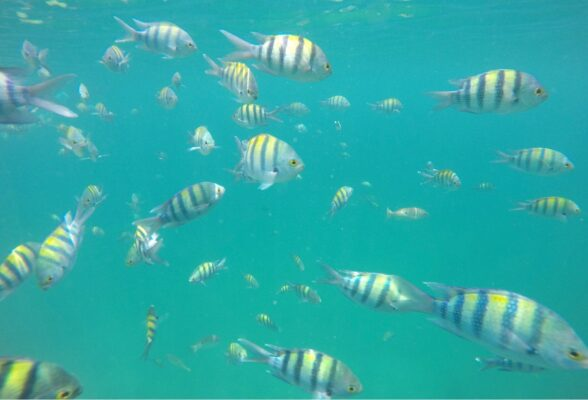 Snorkeling dans les fjords d'Oman