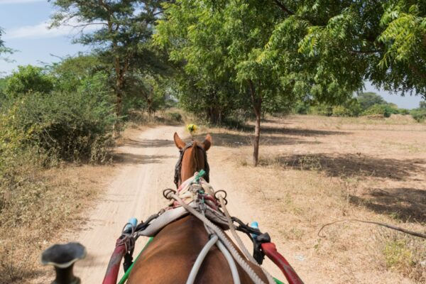 Calèche à Bagan