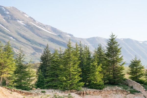 Forêt des cèdres de Dieu au Liban
