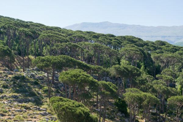 Montagnes du Chouf au Liban