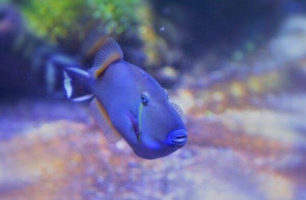 Aquarium de Nausicaa sur la côte d'Opale