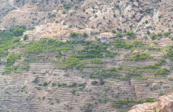 Culture en terrasse au jebel Akhdar
