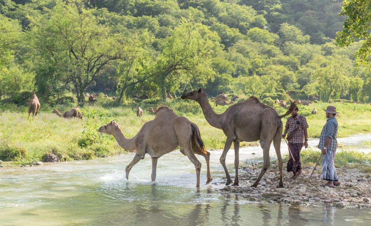 Dhofar à Oman