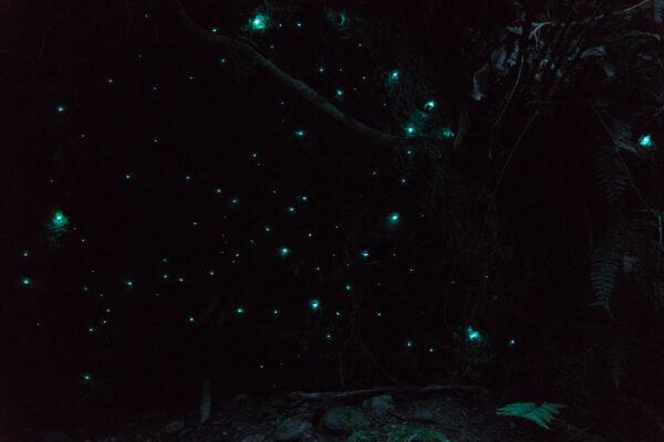 Hokitika Glow Worm Dell