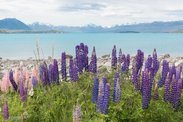 Lac Tekapo en Nouvelle-Zélande