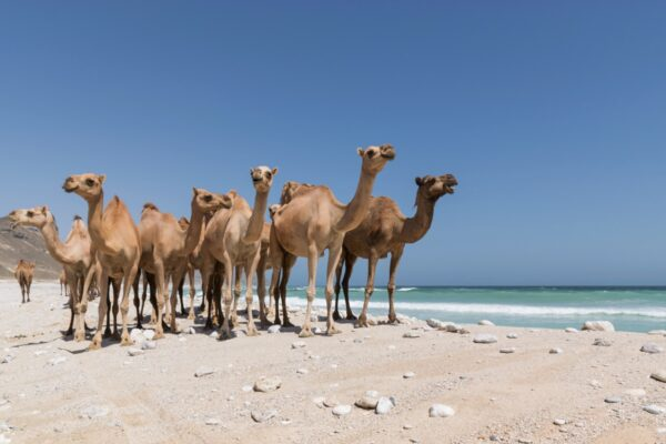 Mughsayl beach - Oman