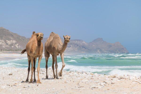 Plage de Mughsayl dans le Dhofar à Oman