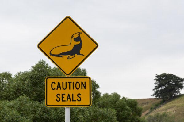 Route de Nouvelle-Zélande