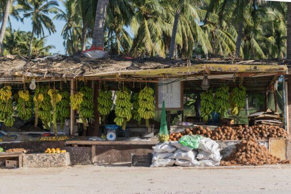 Stands de vente de noix de coco à Salalah