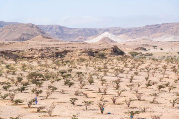 Wadi Dawkah - Dhofar