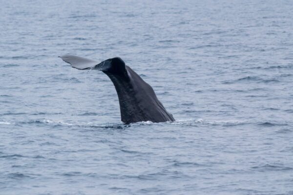 Excursion baleine à Auckland