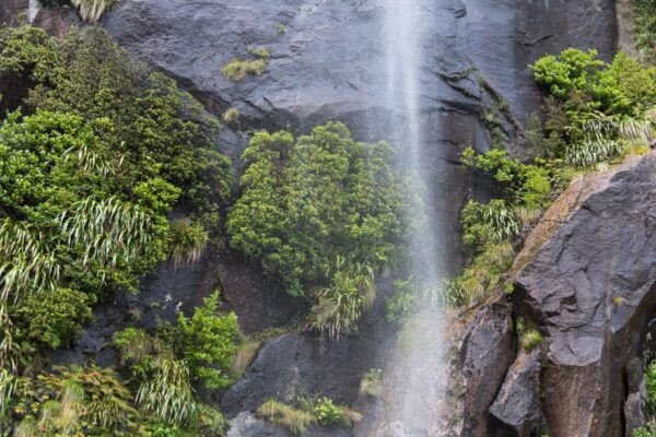 Meilleur croisière à Milford Sound
