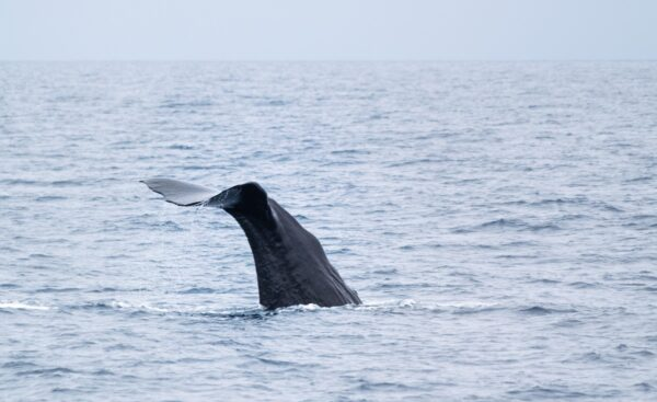 Baleine en Nouvelle-Zélande