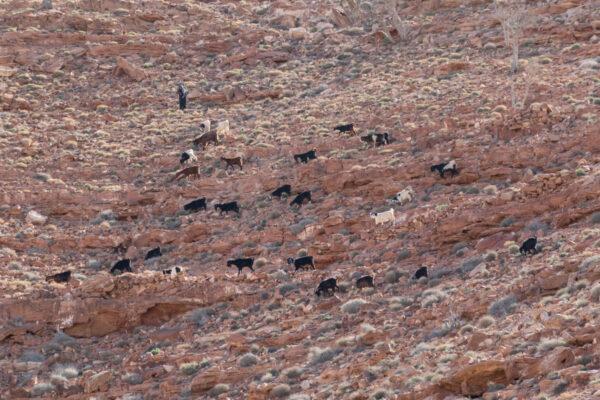 Berger vu au cours de la randonnée vers le jabal Haroun