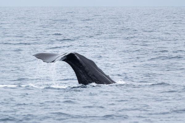 Excursion baleine à Kaikoura