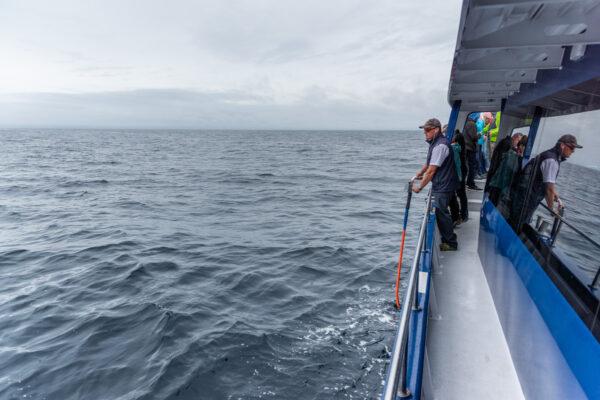 Recherche de baleine en Nouvelle-Zélande