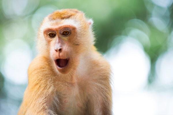 Monkey Hill à Phuket