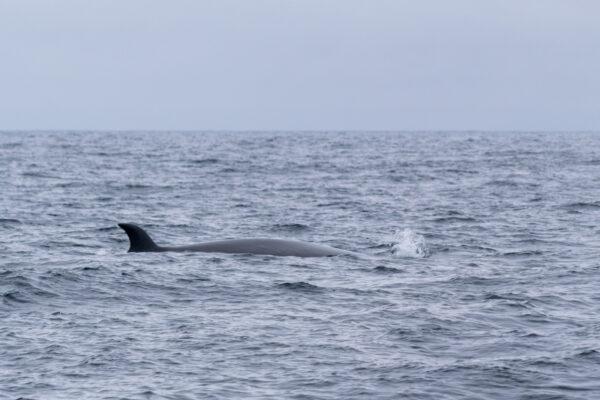Voir des baleines en Nouvelle-Zélande