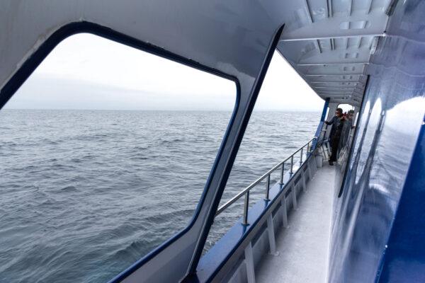 Whale watch Kaikoura, sortie baleine en Nouvelle-Zélande