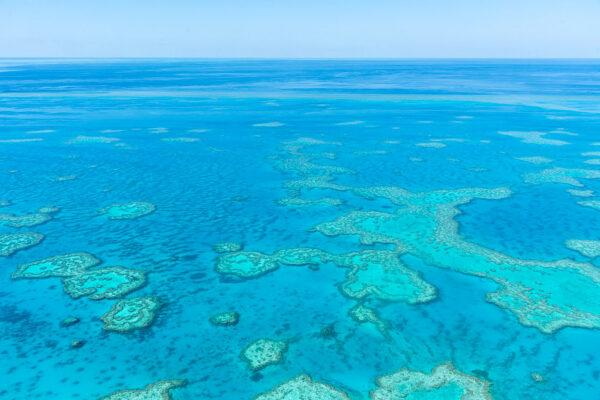 Comment visiter la grande barrière de corail
