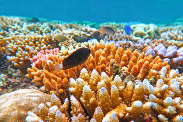 Plongée sur la grande barrière de corail en Australie