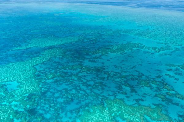 Récif corallien de la barrière de corail