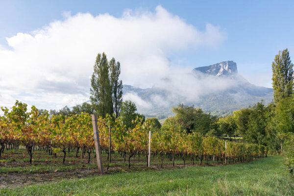 Que faire autour de Chambéry : vignobles