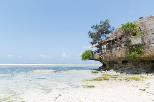 Pingwe à Zanzibar