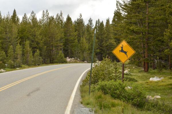 Tioga Road à Yosemite NP
