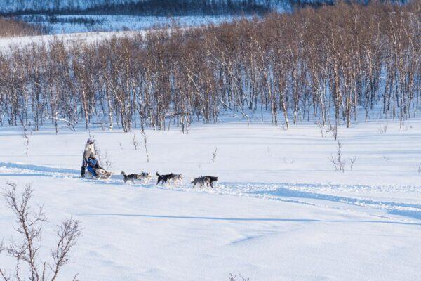 Balade en chien de traineau en Norvège