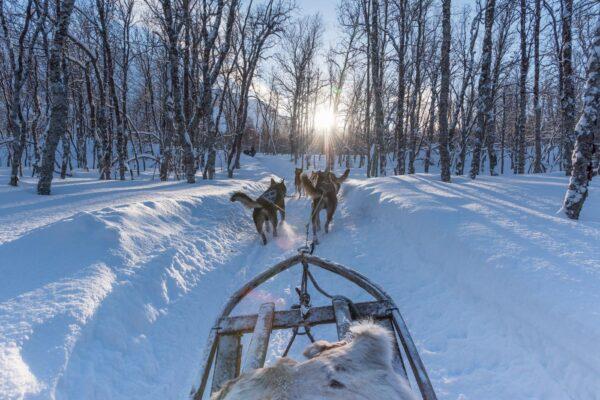 Excursion chien de traineau à Tromso en Norvège