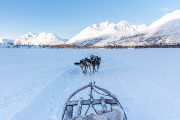Traineau à chiens à Tromso