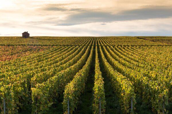 Parc naturel de la montagne de Reims et ses vignobles