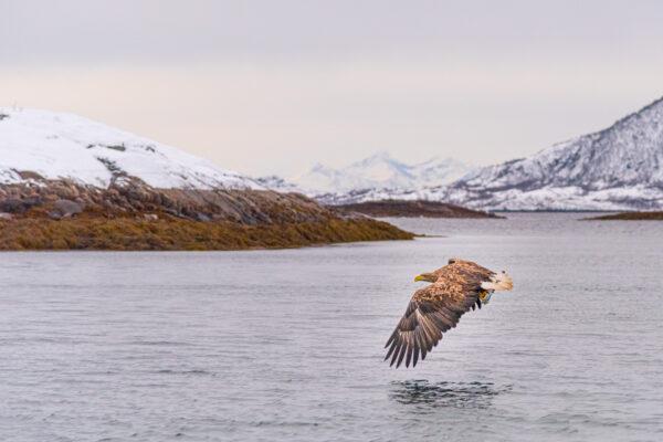 Sortie en mer pour voir des aigles de mer à Trollfjord