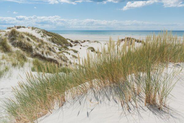 Dunes en baie de Somme