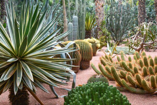 Quand visiter le jardin Majorelle