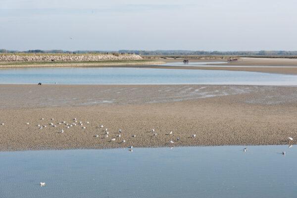 Traversée de la baie de Somme depuis Saint-Valery-sur-Somme