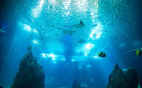 Bassin central de l'aquarium