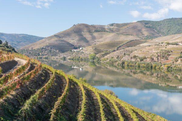 Vignoble dans la vallée du Douro