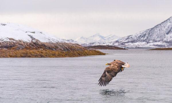 Excursion au Trollfjord en Norvège